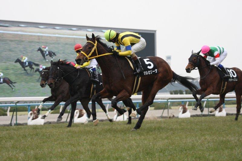 MARCELLINA & NOBLE JEWELRY Elfin Stakes 2011 Courtesy Shadai Farm