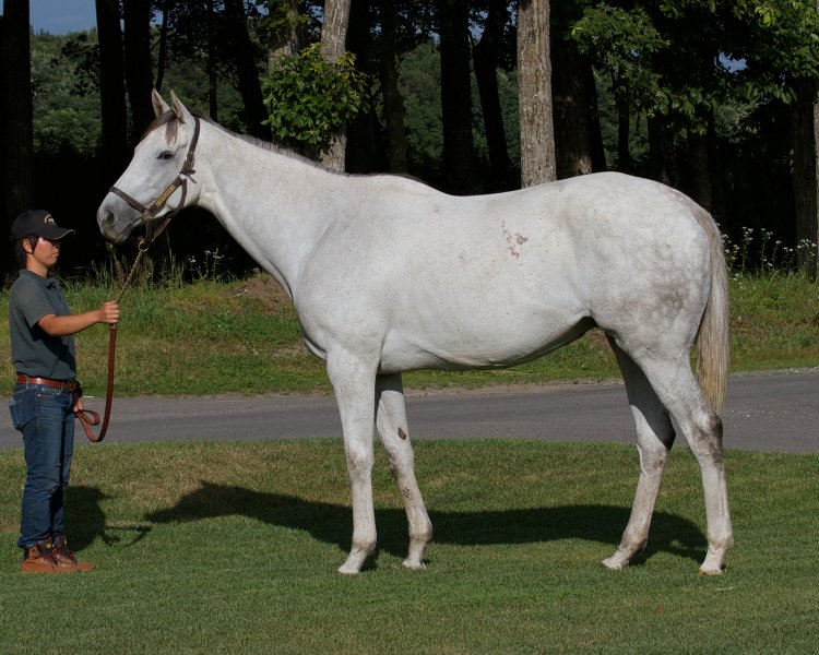STARDOM BOUND, Champion 2yo Filly, at Northern Farm as a Broodmare Courtesy Kate Hunter