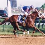 THUNDER GULCH Winning the 1995 Kentucky Derby Courtesy Barbara Livingston