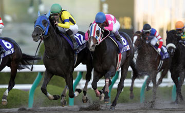 Belshazzar lands Japan Cup Dirt under Lemaire