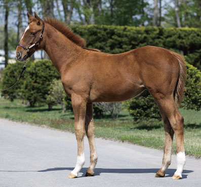 2014 Barancella Daiwa Major Weanling Colt; Courtesy JRHA