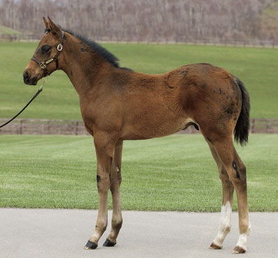 2014 Lady Shatzi / Deep Impact Colt; Courtesy JRHA